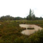 A sok száz kilométeren terülő mocsaras vidék