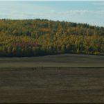 Az erdős rész keveredik a sztyeppékkel